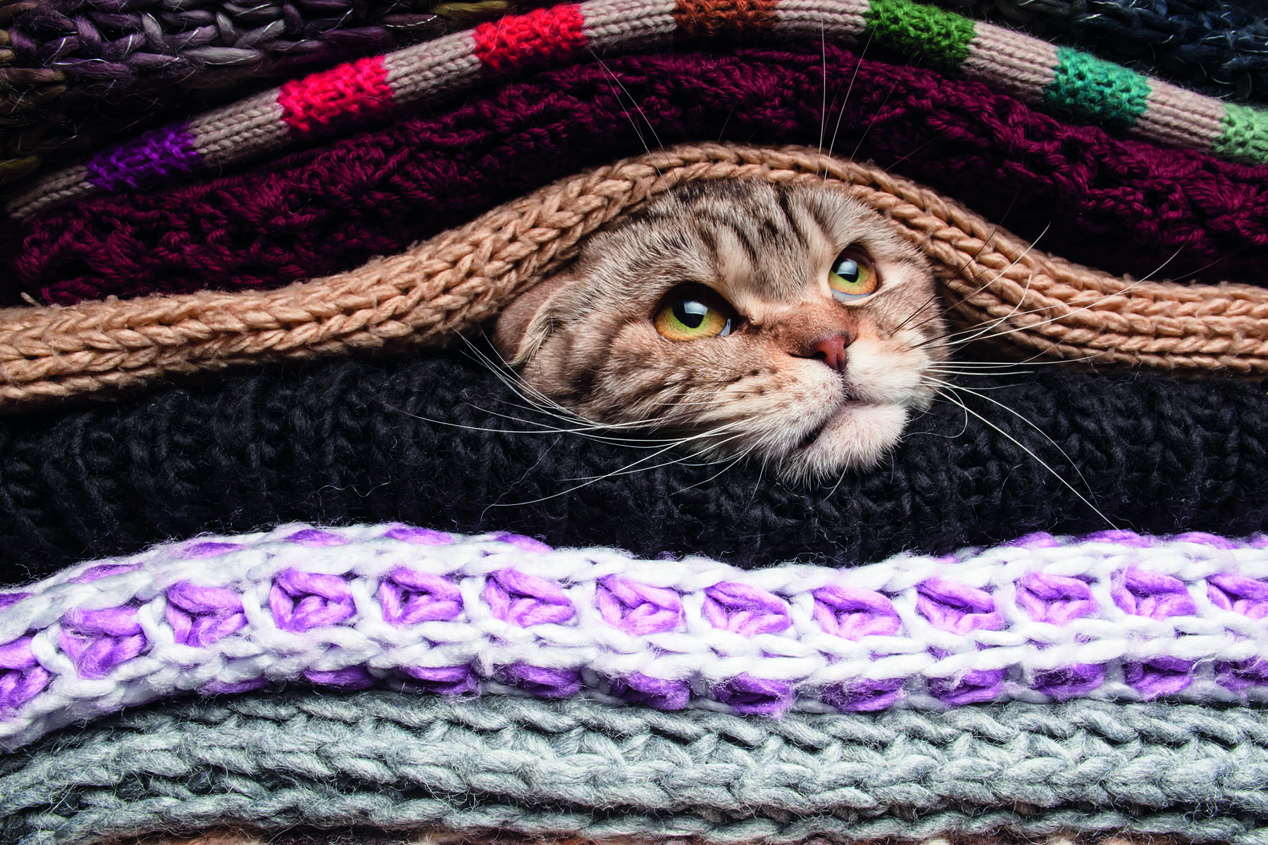 En katt som tittar fram gömd mellan tröjorna på en hylla