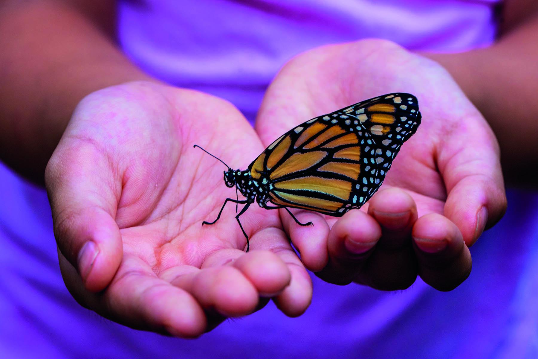 Fjäril som sitter i ett barns öppna händer
