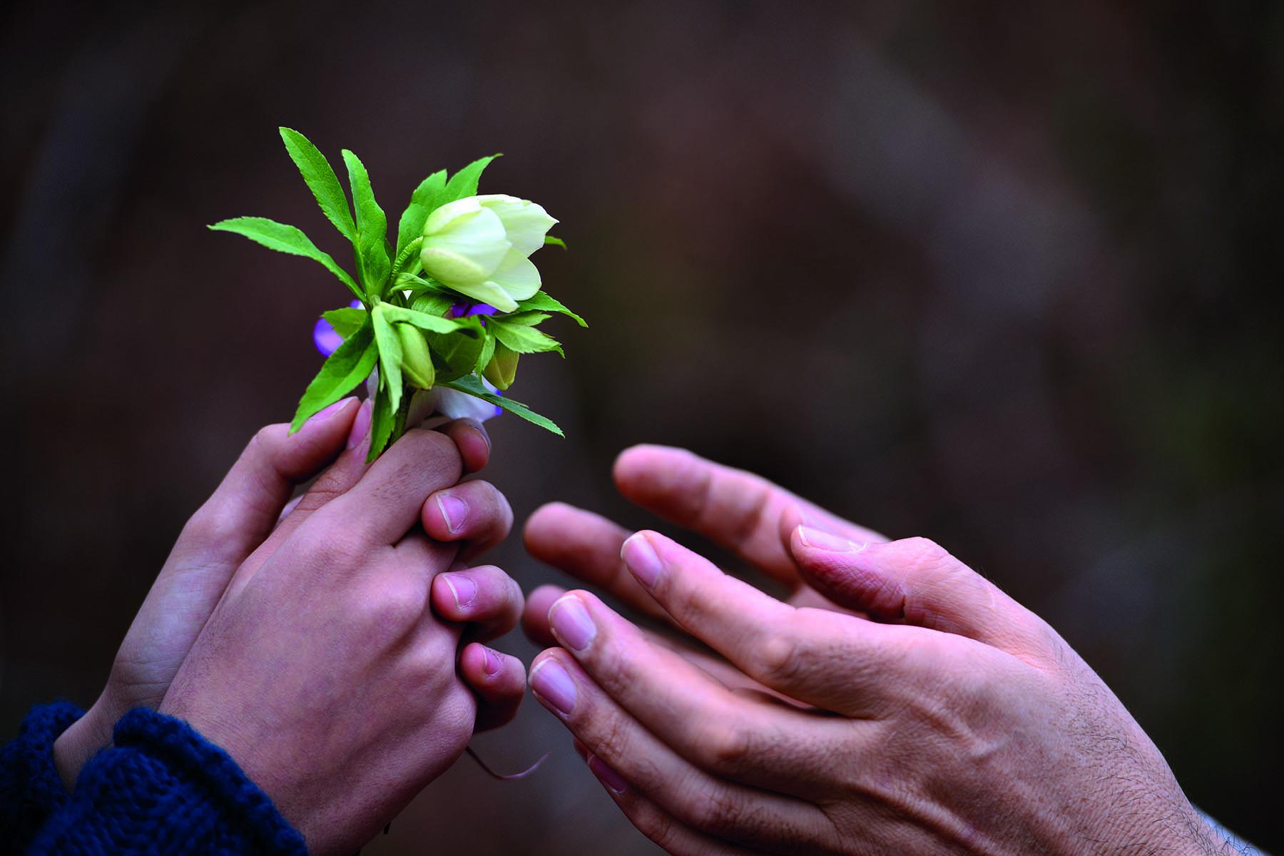 Ett barns händer räcker över vårblommor till sin förälders händer