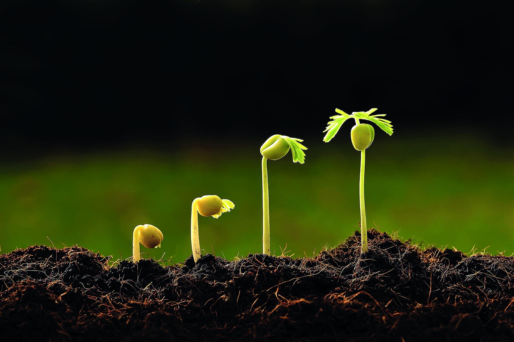 En grodd i fyra stadiers växande