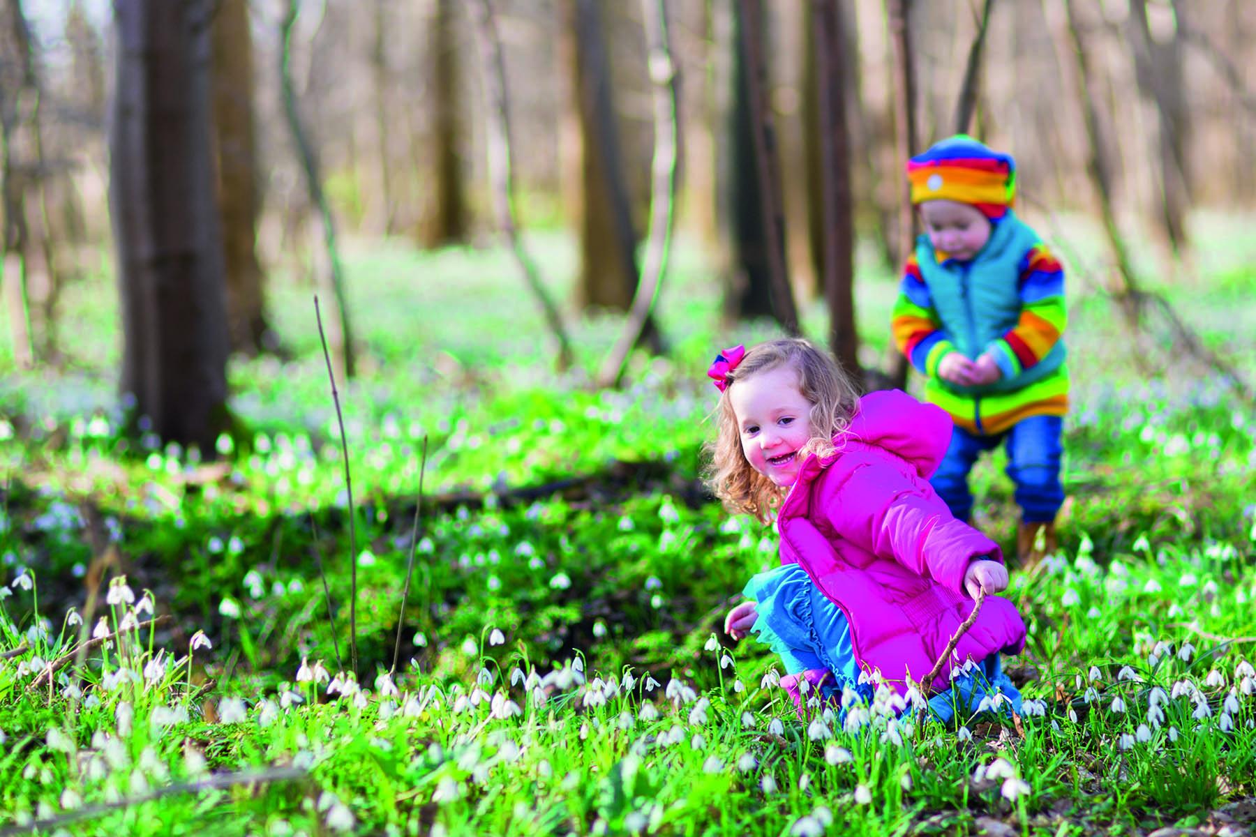 Två barn som plockar i vitsippor i skogen