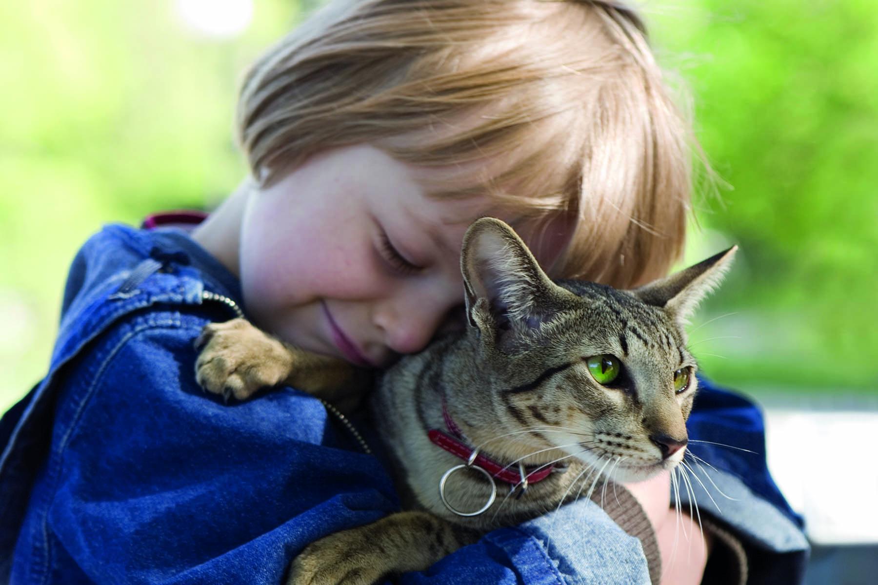En pojke kramar en motvillig katt