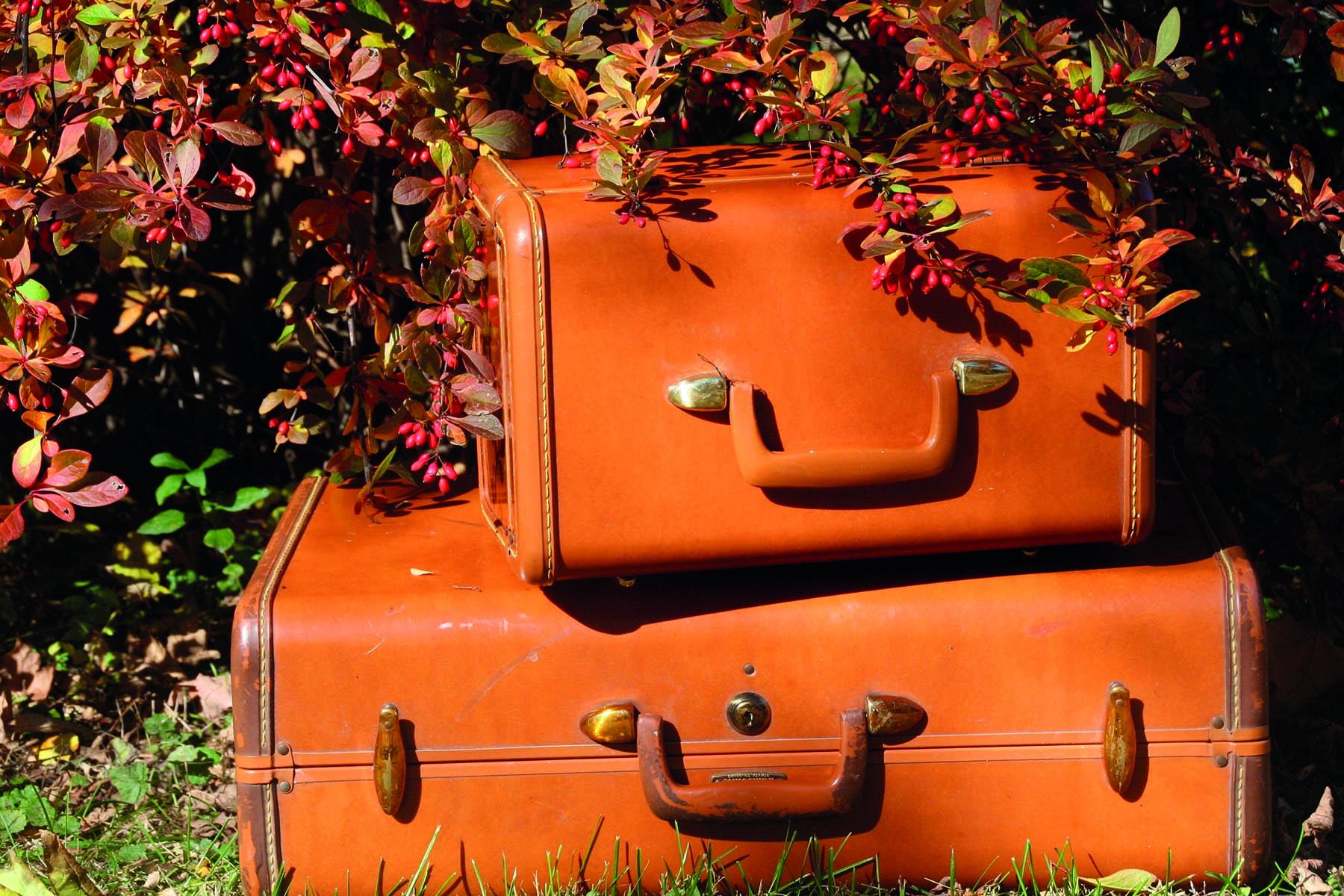 Två gamla resväskor i en trädgård