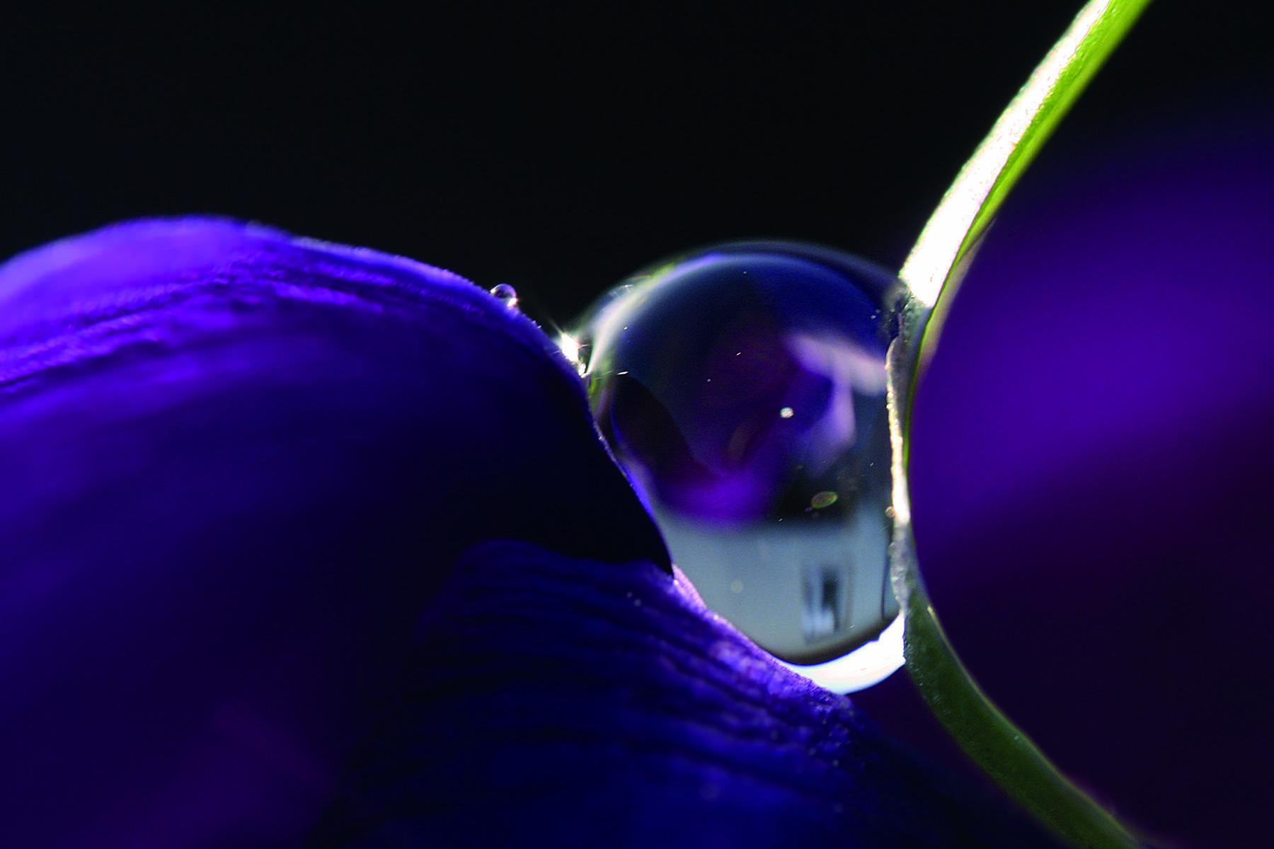 En vattendroppe på ett blad