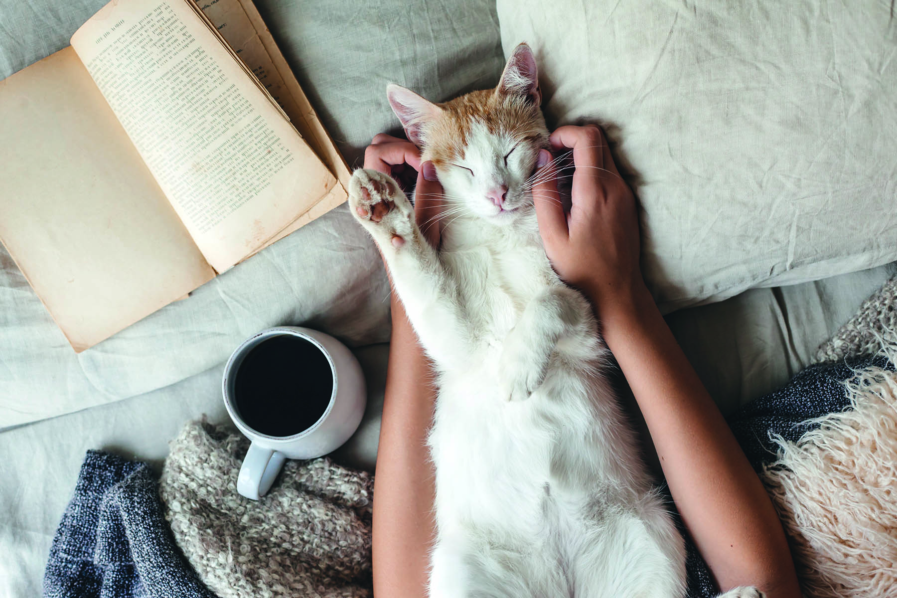 Katt som ligger på rygg och blir kliad